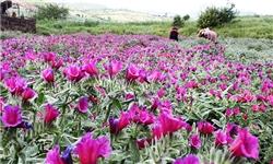 ۴۰ گونه نادر گیاه دارویی در منطقه دودانگه ساری