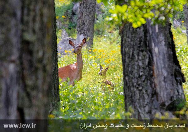 930323_hamedtizruyan-14