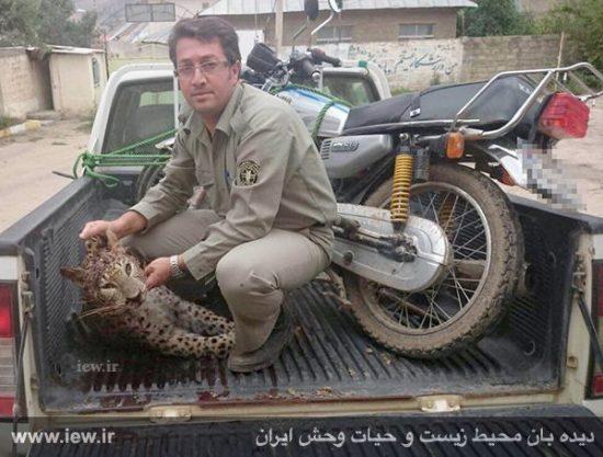 ۲۴ ماه زندان،جزای شکارچیان توله پلنگ در چهاردانگه