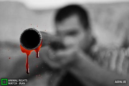 شکار مردم مازندران با اسلحه های شکاری / بی تفاوتی مسئولان همچنان ادامه دارد؟!