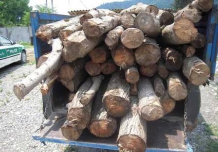 کشف ۲ تن چوب  جنگلی قاچاق در دودانگه