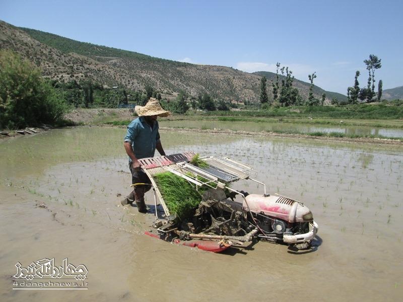 کشت مکانیزه برنج برای اولین بار در بخش چهاردانگه
