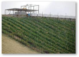ضرورت احداث باغ سیاه ریشه در زمین های شیبدار