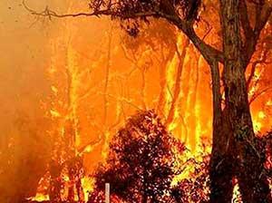 مهار آتشسوزی در منطقه گدوک سوادکوه