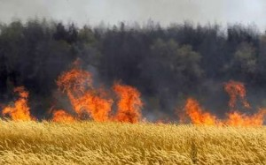 ۱۰ هکتار از مزارع روستای لالا بخش چهاردانگه در آتش سوخت