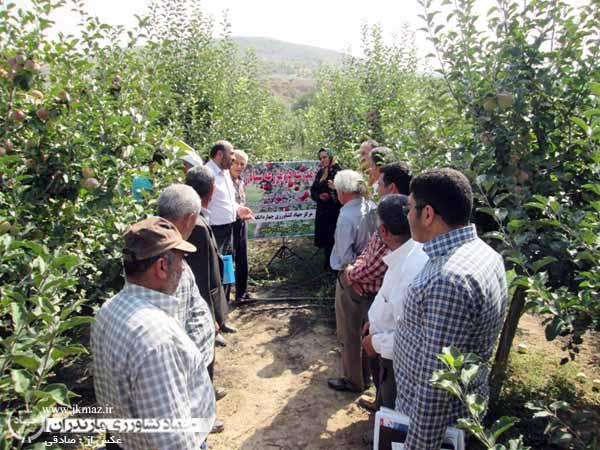 گزارش تصویری برگزاری پروژه آموزشی ومشارکتی برداشت سیب در چهاردانگه