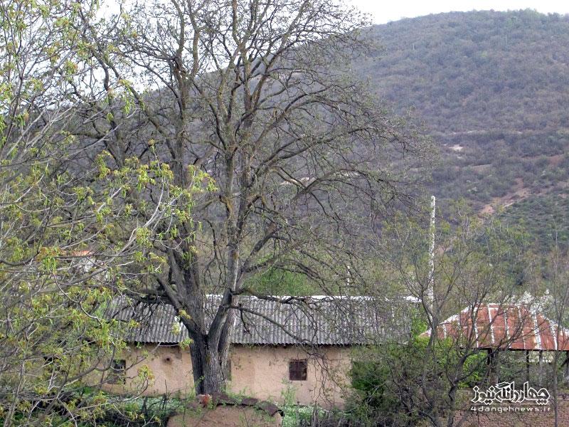 bahar-trkam-11