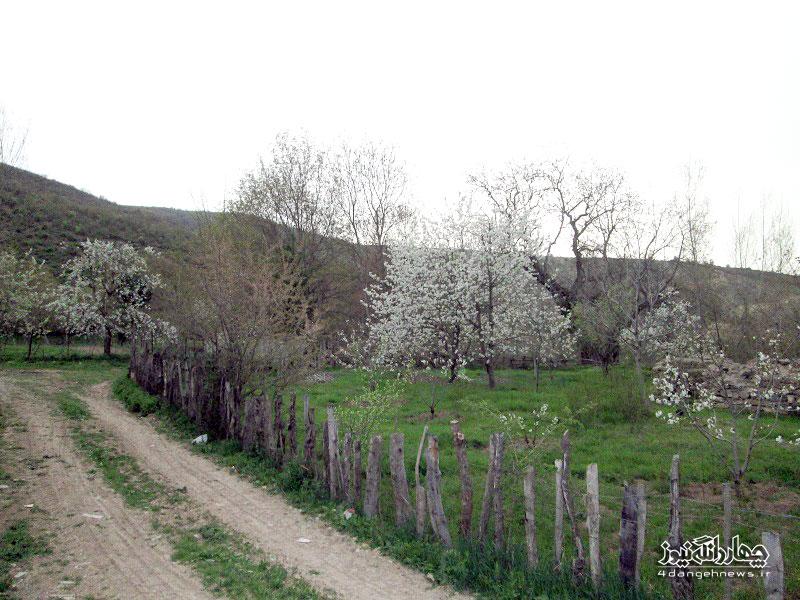 bahar-trkam-2