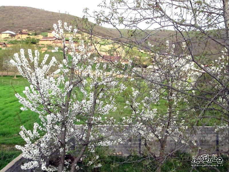 تصاویر زیبای بهاری از روستای ترکام