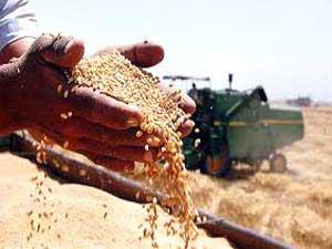 خرید تضمینی گندم شمال کشور از مرز یک میلیون تن گذشت
