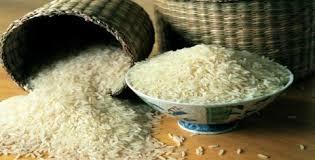 معرفی ارقام جدید برنج پرمحصول به نام دانشمندان هستهای در ساری