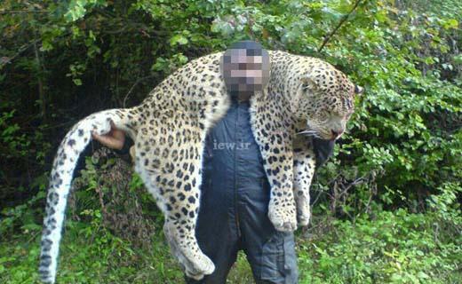 دو سال حبس برای عامل کشتار پلنگ در سوادکوه + تصاویر