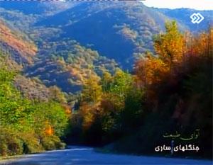 فیلم: سفری به جنگل های ساری