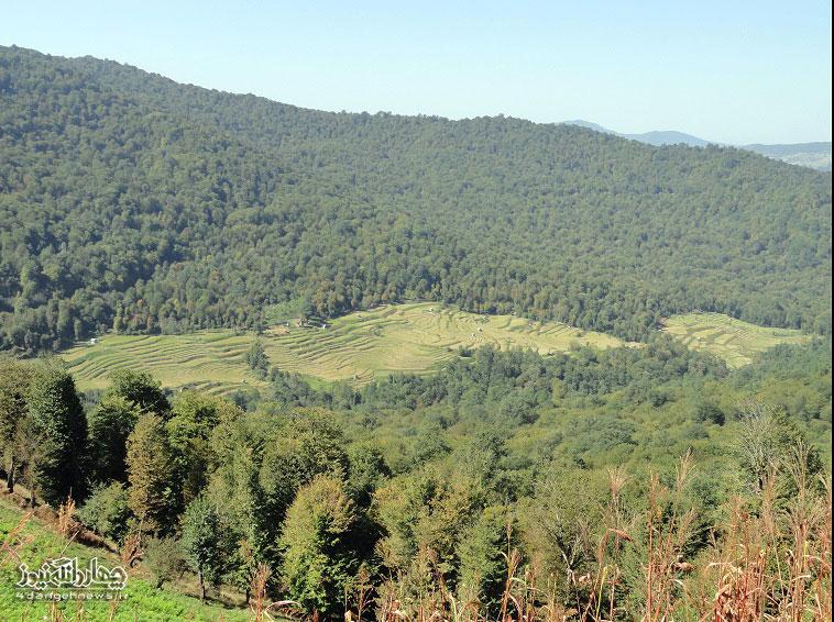 خشک شدن بیش از 40 هکتار از زمینهای شالیزاری روستای سرخ ولیک