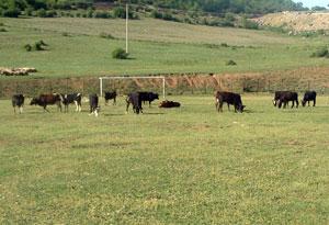 zamin-football-kiasar-thum